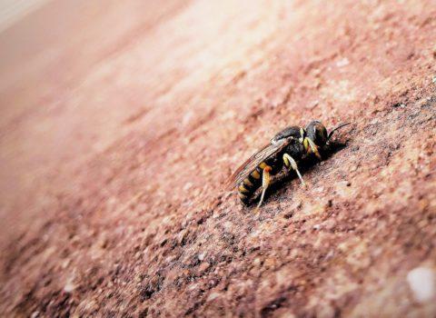 Bee sustainable, bee Halle!