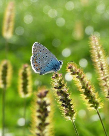 5.05.   Flora.Fauna.Habitat (FFH)- Wie kann eine EU-Richtlinie Natur schützen?