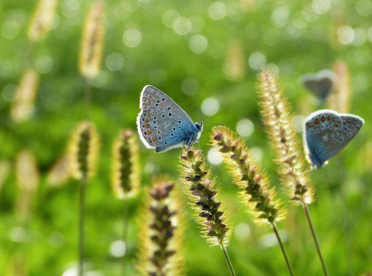 5.05. | Flora.Fauna.Habitat (FFH)- Wie kann eine EU-Richtlinie Natur schützen?