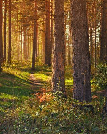 19.05.   Der Wald in Zeiten des Klimawandels