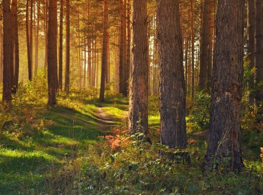19.05. | Der Wald in Zeiten des Klimawandels